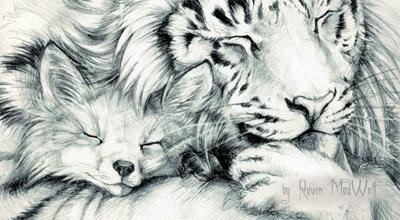 A Raposa e o Tigre